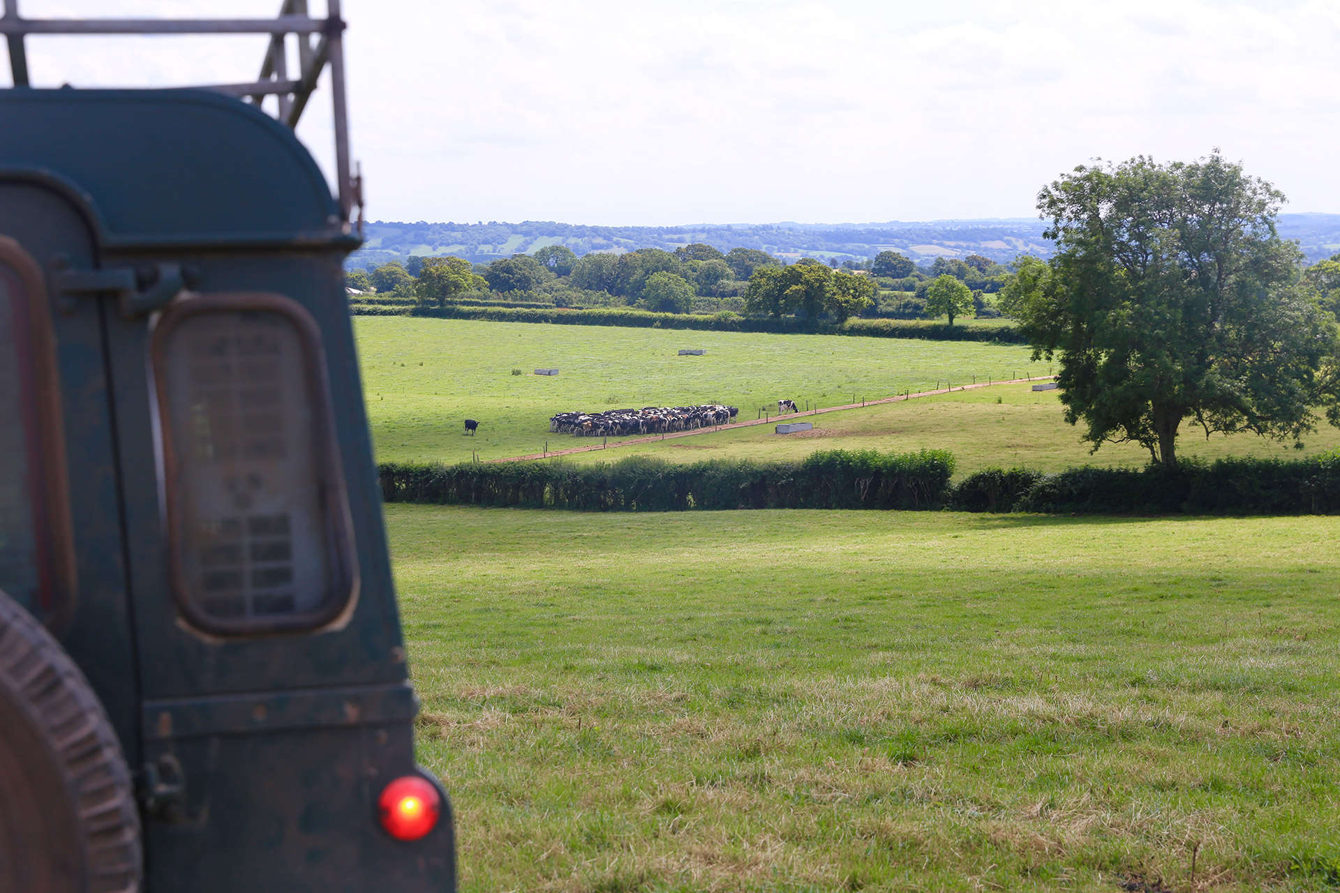 The view of Richards cattle from his Land Rover Defender